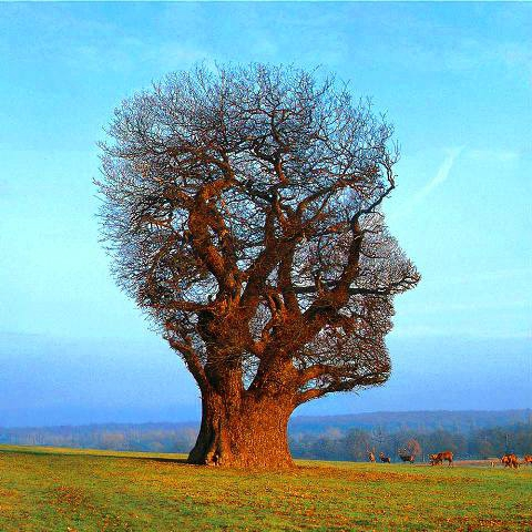 arbre tête